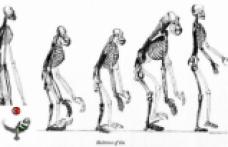 Yeni fosiller, insan atalarının Afrika'da değil, Avrupa'da geliştiğini gösteriyor