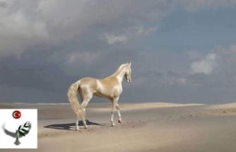 Efsane Ahal Teke Atları ve Özellikleri
