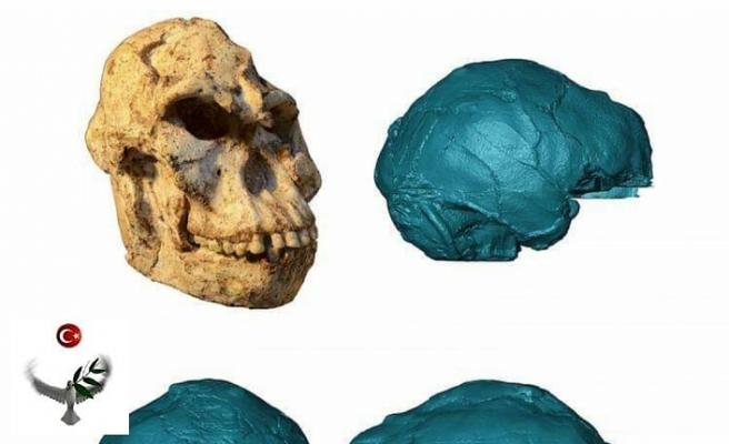 20 yıl önce mağarada bulunan fosil: Yarı insan yarı maymun!