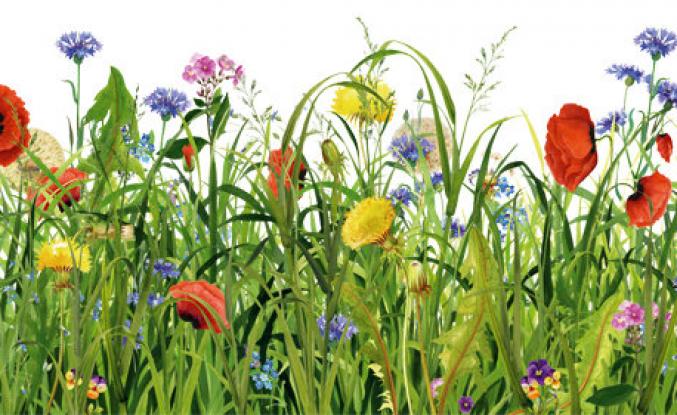 Langa Bostanları, Çiçeği Burnunda ve Hıyar Gibi Adam Deyimleri - Prof. Dr. Hatice ŞİRİN