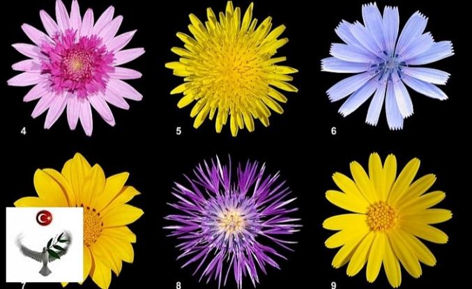 Bitki Adları Üzerine