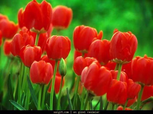 Türkçe renk isimleri, Türkçe çiçek isimleri